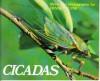 Cicadas - Densey Clyne