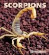 Scorpions - Peter Murray