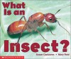 What Is An Insect? - Susan Canizares, Mary Carpenter Reid