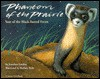 Phantom of the Prairie: Year of the Black-Footed Ferret - Jonathan London, Barbara Bash