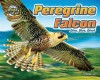Peregrine Falcon: Dive, Dive, Dive! (Blink of An Eye: Superfast Animals) - Natalie Lunis