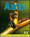 Ants - Ruth Berman
