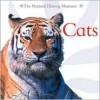 Cats - Barbara Taylor