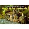 More Baby Animals: A Sierra Club Postcard Book for Kids - Sierra Club Books