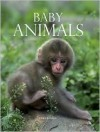 Baby Animals - Derek Hall