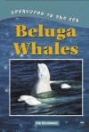 Beluga Whales - Kris Hirschmann