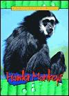 Howler Monkeys - Sandra Donovan