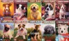 The Puppy Place Library 10 Book Set: Goldie, Snowball, Shadow, Rascal, Buddy, Flash, Scout, Patches, Pugsley, and Maggie & Max - Ellen Miles