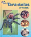 Tarantulas Up Close - Carmen Bredeson