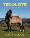 Tecolote: The Little Horse That Could - Sandy Nathan