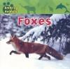 Foxes - Edward Barnard