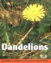 Dandelions - Kathleen V. Kudlinski, Jerome Wexler