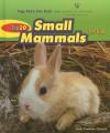 Top 10 Small Mammals for Kids - Ann Gaines