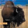 Buffalo - Win Blevins