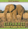 Elephants: From Trunk To Tail (Mighty Mammals) - Lucy Sackett Smith, Nicole Pristash