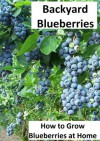 Backyard Blueberries: How to Grow Blueberries at Home...Easily - Emma Wilson