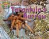 Inside the Tarantula's Burrow - Natalie Lunis