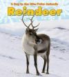 Reindeer (Heinemann Read and Learn) - Katie Marsico, Michael Bright