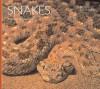 Snakes - Martin Gaywood, Ian F. Spellerberg