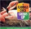 A Flamingo Chick Grows Up - Joan Hewett, Richard Hewett