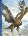 Eagle: The Life and Times of a Young Eagle - Steve Parker