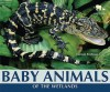 Baby Animals of the Wetlands - Carmen Bredeson