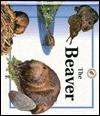 Beaver - Sabrina Crewe