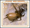 Funnel Web Spiders - Louise Martin