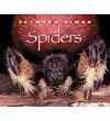 Spiders - Seymour Simon