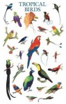 Tropical Birds Poster - Dover Publications Inc.