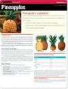 CHART: Pineapples (Quamut) - NOT A BOOK