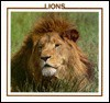 Lions (The Big Cat Discovery Library) - Lynn M. Stone