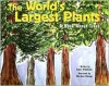 The World's Largest Plants: A Book about Trees - Susan Blackaby, Charlene Delage