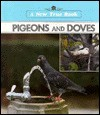 Pigeons and Doves - Ray Nofsinger, Jim Hargrove