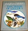 Original Water-Color Paintings by John James Audubon for The Birds Of America - John James Audubon