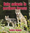 Baby Animals in Northern Forests - Bobbie Kalman