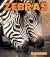 Zebras - Jenny Markert