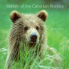 Wildlife of the Canadian Rockies - Wayne Lynch
