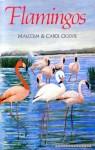 Flamingos - Malcolm Ogilvie