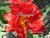 Flowers - Werner Stejskal