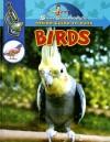 Birds - Slim Goodbody, Ben McGinnis