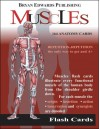 CARDS: The Muscles (Flash Cards) - NOT A BOOK