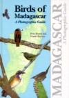 Birds Of Madagascar: A Photographic Guide - Peter Morris