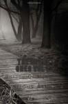 The Broke Ones Vol 2: Shadow Of Memories - Various Artists, Dana La Kat