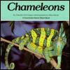 Chameleons - Claudia Schnieper