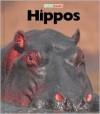 Hippos - Jenny Markert