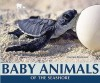 Baby Animals of the Seashore - Carmen Bredeson