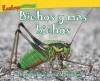 Bichos y Mas Bichos = Bugs and More Bugs - Trace Taylor, Lucia M. Sanchez