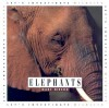 Elephants (Let's Investigate) - Marc Nieson