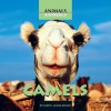 Camels - Judith Jango-Cohen